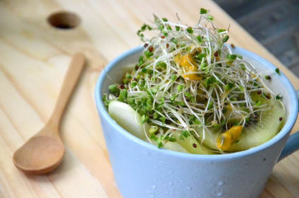 Growing Broccoli Seeds for Broccoli Sprouts at Home