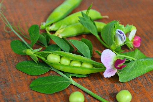 Health Benefits with Eating Pea Shoot Leaves Regularly