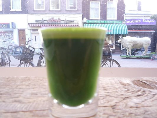 wheatgrass juice recipe